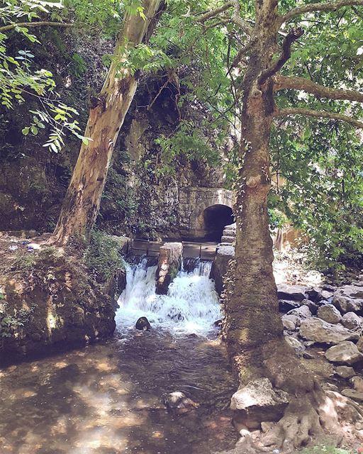 Good Morning 💚💙 lebanon🇱🇧 hiking ❤ (Koura)