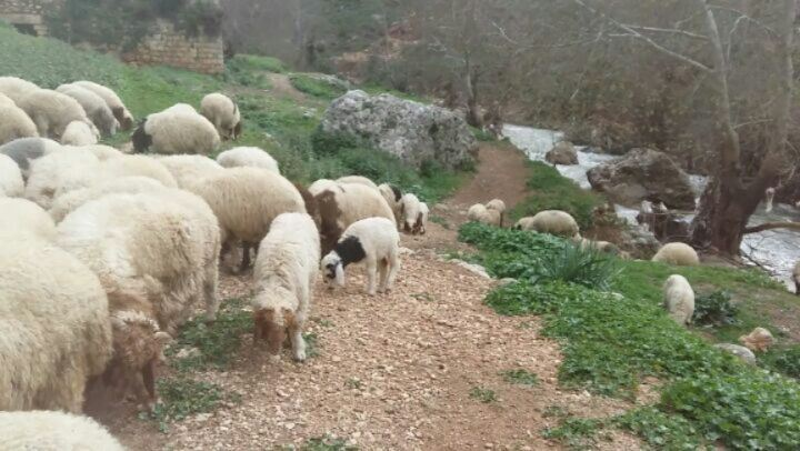 Trying to live like a Shephard 😀😀 thebestinlebanon mycountrylebanon ...