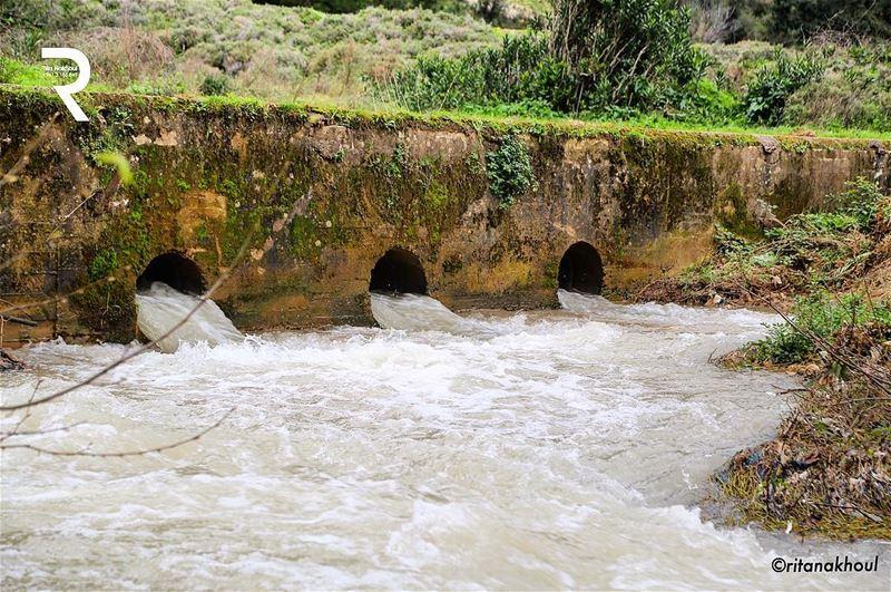 ... no water no life ... no green no blue ...👇👇👇👇👇👇👇👇👇👇👇... (عيون السمك)
