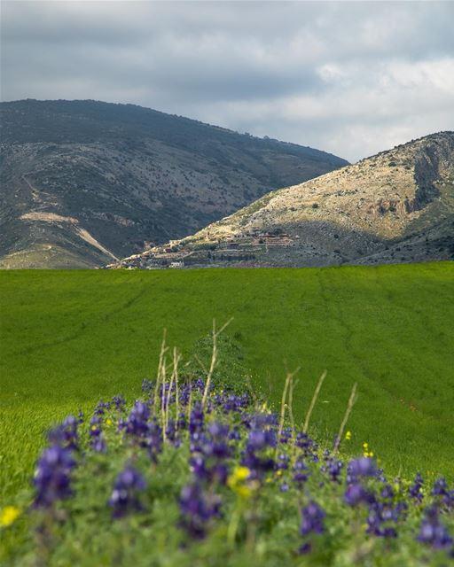 spring ... photography photographer photooftheday landscape... (Jarmaq, Al Janub, Lebanon)
