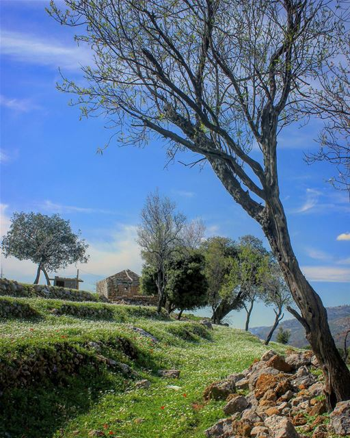 I Smell Spring WalkWithNature 👣 🍃 spring springiscoming 🌸🌸🌸🌸🌸... (Lebanon)