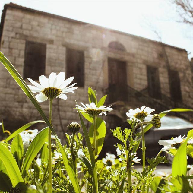 و تزَهِّر الدّني🍃🌼🍃❤... lebanon bhamdoun livelovebhamdoun ... (Bhamdoûn, Mont-Liban, Lebanon)