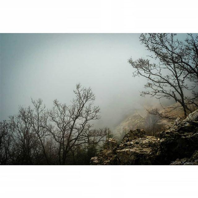 lebanon cedar trees landscape mist reserve woods tree nature ... (Arz el Bâroûk)