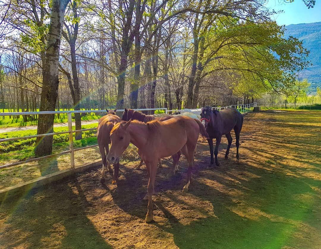 That's happiness. 🐎 horses... (`Ammiq, Béqaa, Lebanon)