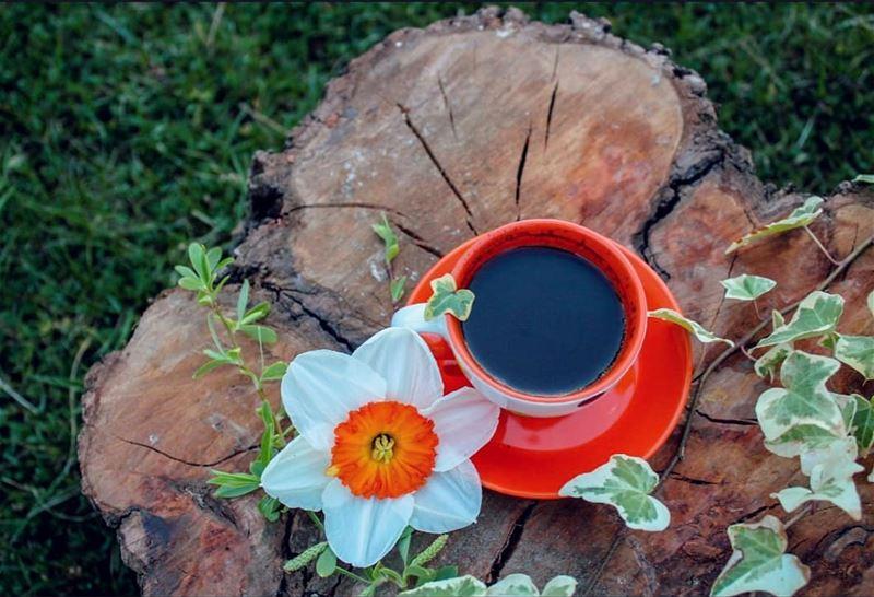 يكفي أن تستيقظي كل صباح وتسكُبين القهوة بيديك الحانيتين لتنتهي جميع الحروب