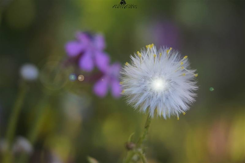 Just like the weather, people change. chouf macros macrophotography...