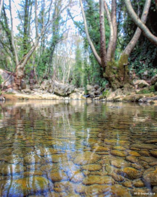tb sunday mokhtara mountlebanon river trees winter reflection ... (El-Mukhtarah, Mont-Liban, Lebanon)