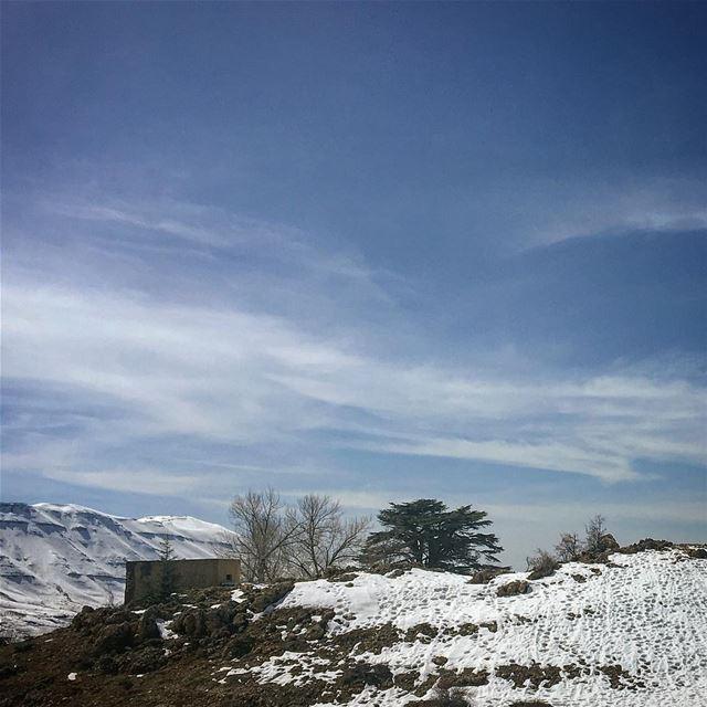 lebanon arz cedars amazingviewsoflebanon amazingviewsofnorthlebanon ... (Bcharreh, Liban-Nord, Lebanon)