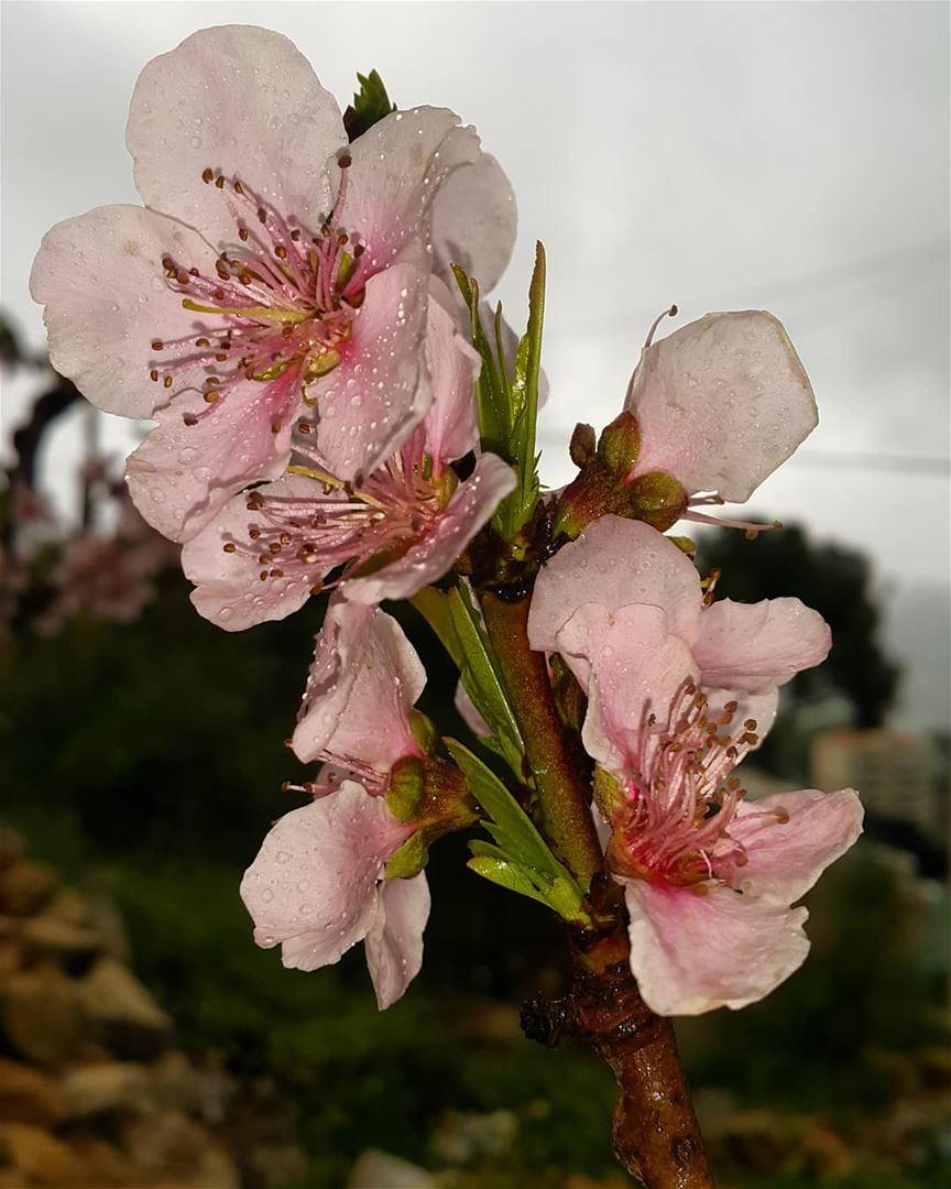 morning rain spring springbreak nature natureisbeautiful livefree ... (Zar`Un, Mont-Liban, Lebanon)
