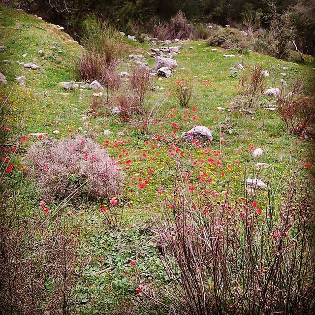spring flower ehden nature hiking ... (Ehden Adventures)