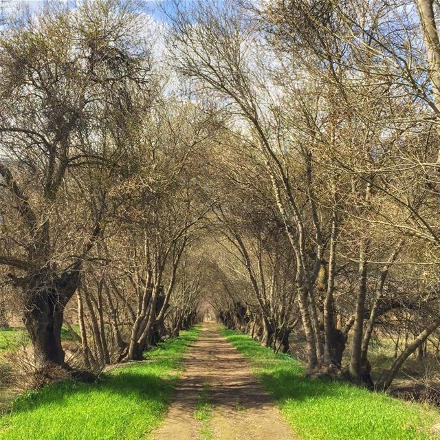 """""""Some beautiful paths can't be discovered without getting lost.""""... (`Ammiq, Béqaa, Lebanon)"""