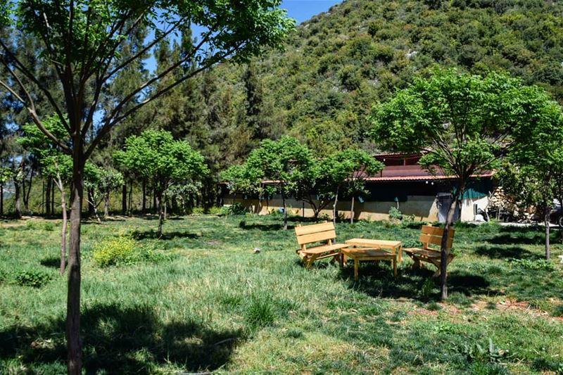 S.P.R.I.N.G 💚 welcome spring green landscape nikon photography ... (Batroun District)