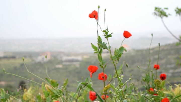 طل و سألني إذا نيسان دق الباب ... nature lebanon southlebanon nabatieh...