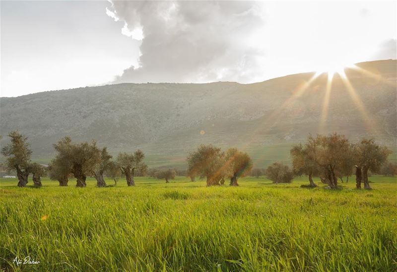 Our beautiful south ☀️.... nature landscape landscapephotography... (Jarmaq, Al Janub, Lebanon)