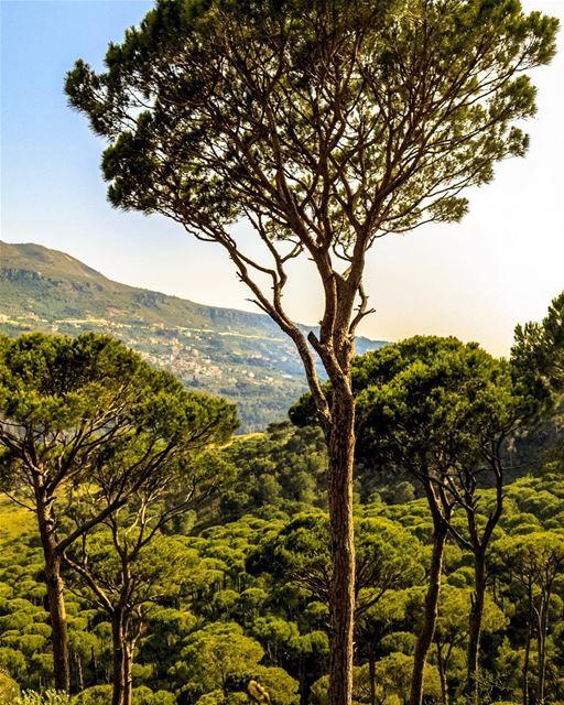 Lebanon remhala landscape nature lebanon_hdr loves_lebanon super_lebanon... (Aïn Ksoûr, Mont-Liban, Lebanon)