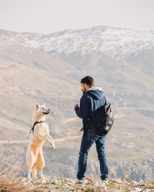 No No sit sit bad dog no sitttt mabyefham wanderwithgrey notsogrey ... (Qanat Bakish, Mont-Liban, Lebanon)