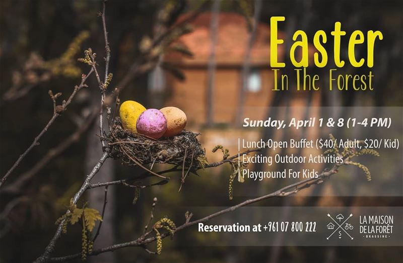There's no better place to celebrate Easter than in the Forest! 🌳🐤This...