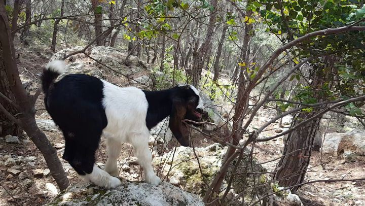 Met this baby on my way in the woods ,cuuute animallovers bestofnature ... (Miziâra, Liban-Nord, Lebanon)