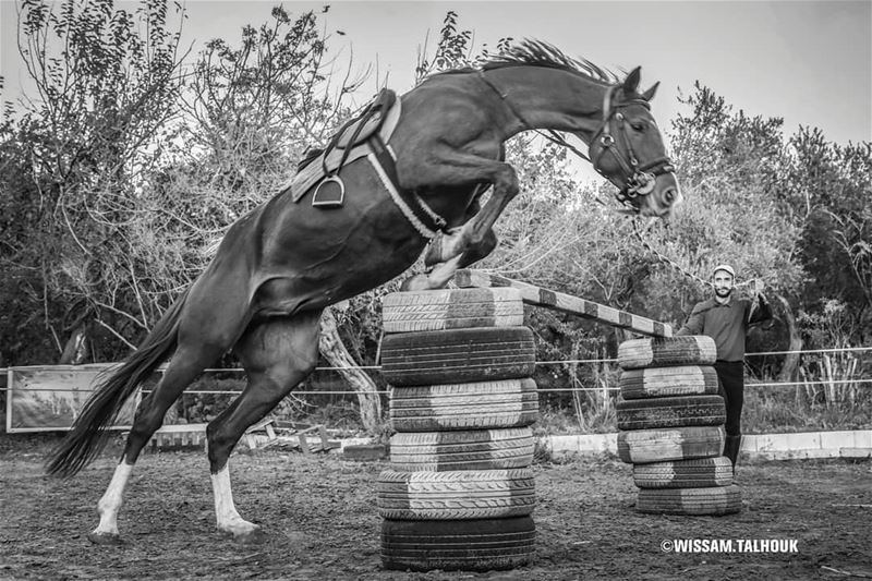 Don't run away from challenges, JUMP over them... jumping horse horses ... (Al Adham)
