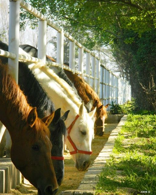 horse  animal  streetphotography  outdoors  noperson  travel  tourism ...