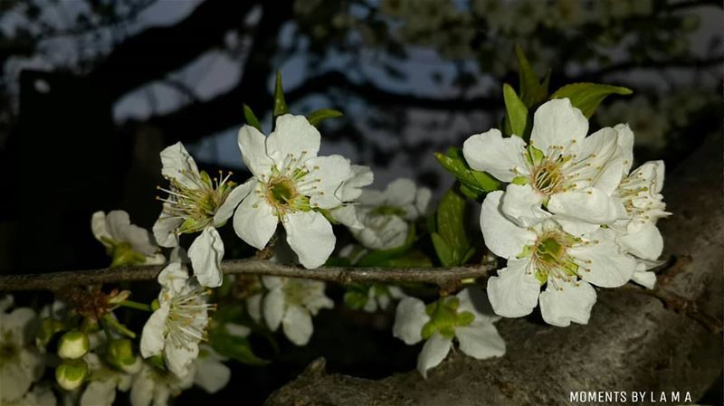 Hello Spring 🌸 landscapephotography naturephotography nature_lovers... (Bakhoun, Liban-Nord, Lebanon)