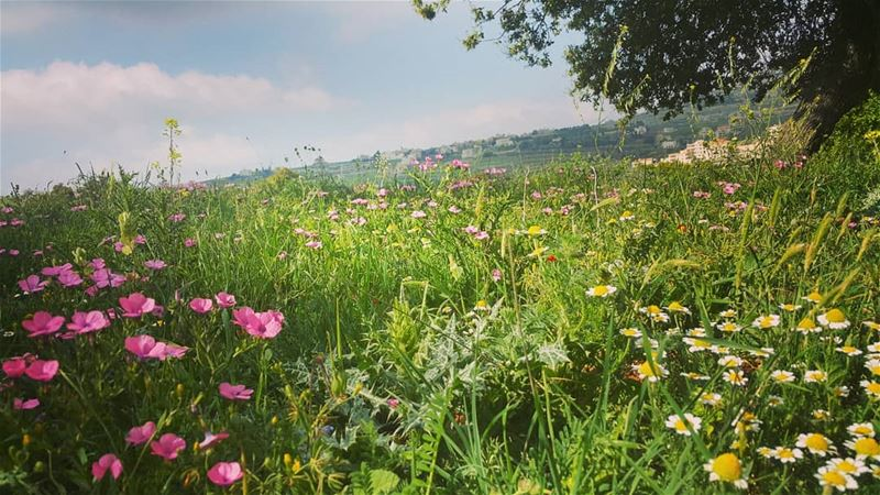 yarounday yaroun nature green flower pink southlebanon ...