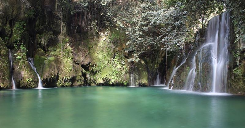 Ready to swim, Waterfalls water shallalatalzarka livelovechouf tree ... (Shallalat Al Zarka شلالات الزرقا)