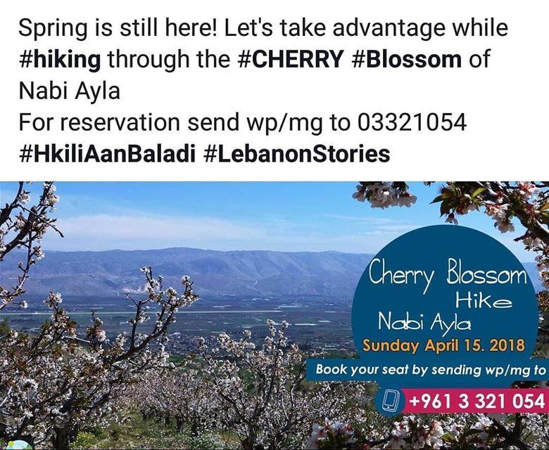 cherry cherryblossom spring blossom HkiliAanBaladi LebanonStories ...