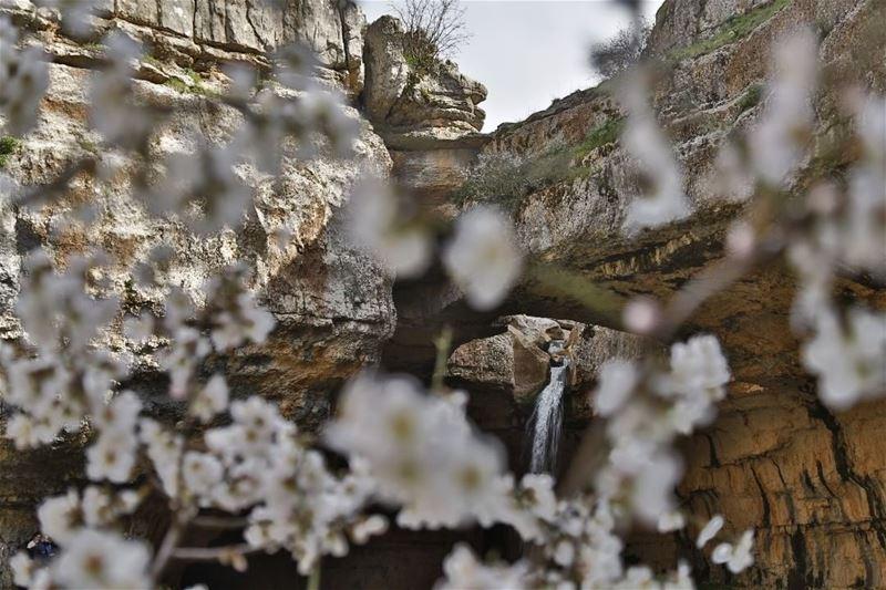 lebanon lebanse nature naturephotography waterfall gaia ... (Bâloûaa Balaa)