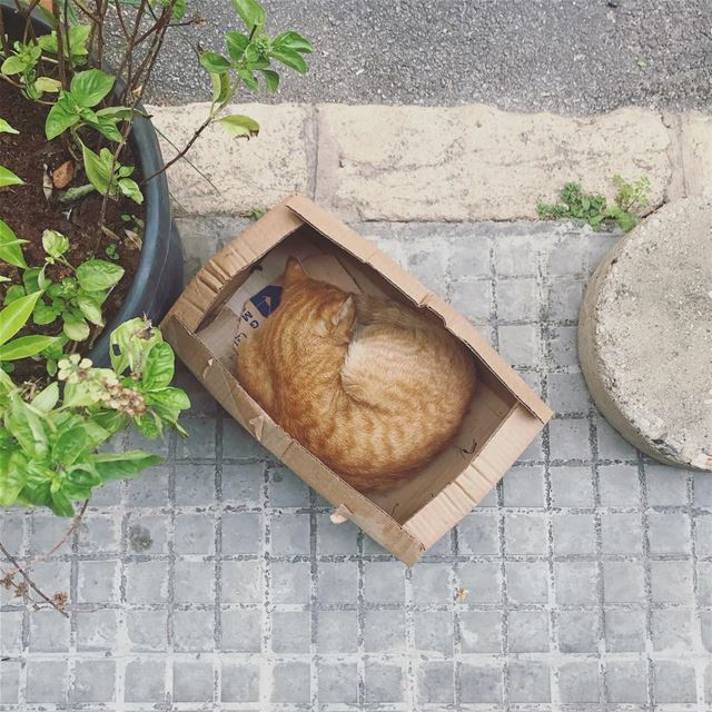 It's just my cat in a... (Beirut, Lebanon)