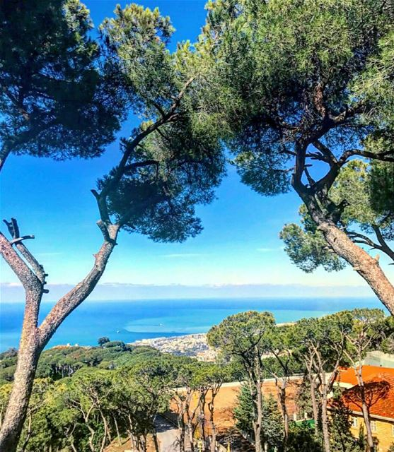 New day New blessing Good morning everyone 🌳💙-------------------------- (Broummâna, Mont-Liban, Lebanon)