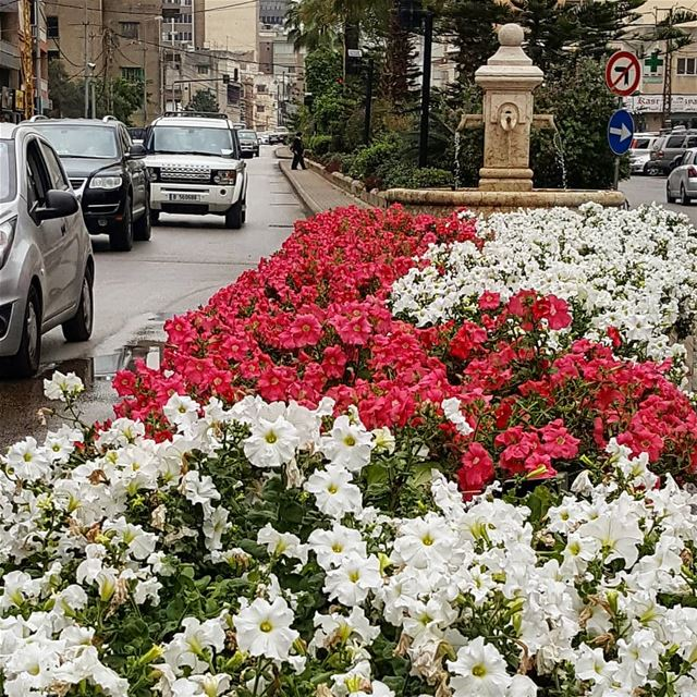 Bloom where you are planted zalka livelovezalka lebanoninapicture ... (Az Zalqa', Mont-Liban, Lebanon)