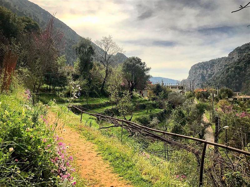 natureoftheplanet1 lebanoninapicture yourlifeoutdoors ... (Chouène, Mont-Liban, Lebanon)