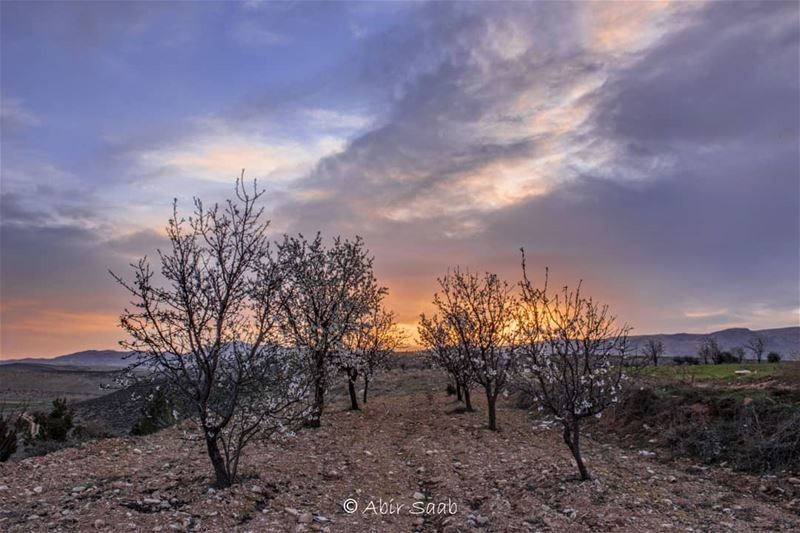 The dawn was breaking fully, and I witnessed one of the most beautiful... (Beqaa Governorate)