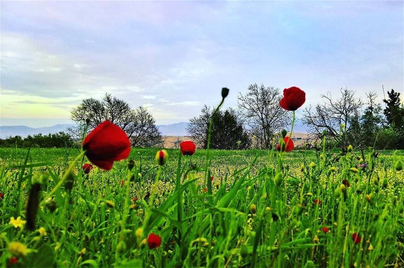 spring is coming ...Photo credits to @firassafwan hermel hermel_city ... (El Hermel, Béqaa, Lebanon)