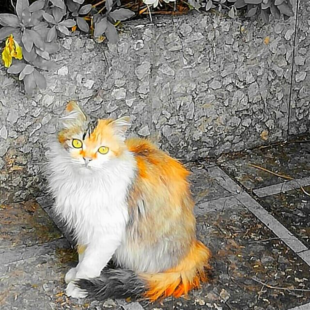 streetphotography cat yellow beautifuleyes shockedface ...