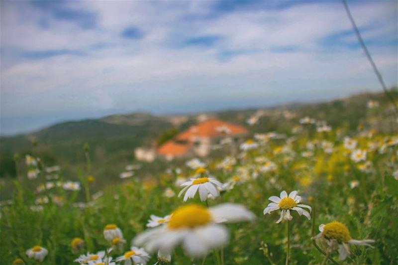 'dont pack up ur camera until u've left the location...''''... (Lihfid, Mont-Liban, Lebanon)