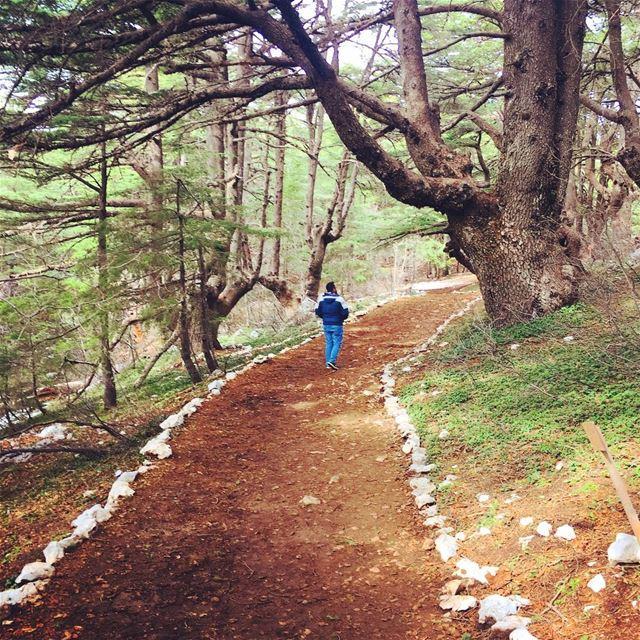 Lost But Never Found🌲. cedar barouk cedaroflebanon shouf lebanon ... (Al Shouf Cedar Nature Reserve)