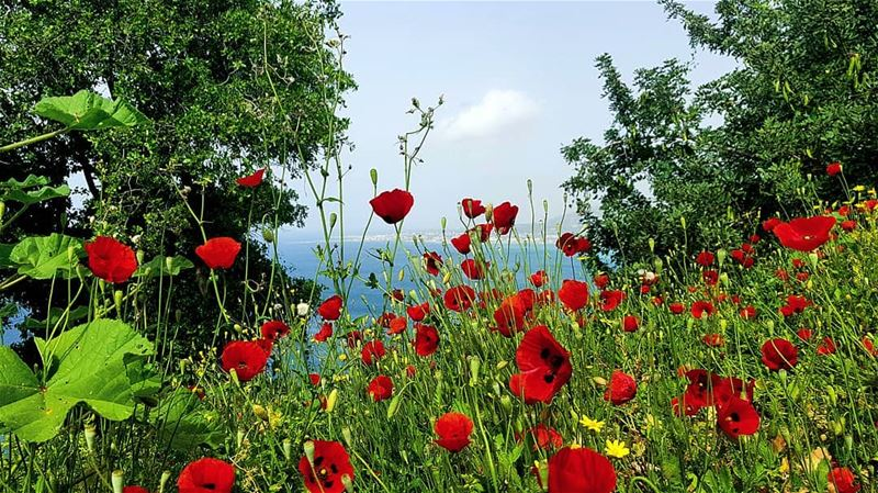 A flower does not think of competing with the flowers next to it... it... (Der L Nouriye)