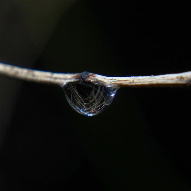 What you can see in Just a drop of water. rain water lebanon ... (Jezzîne, Al Janub, Lebanon)