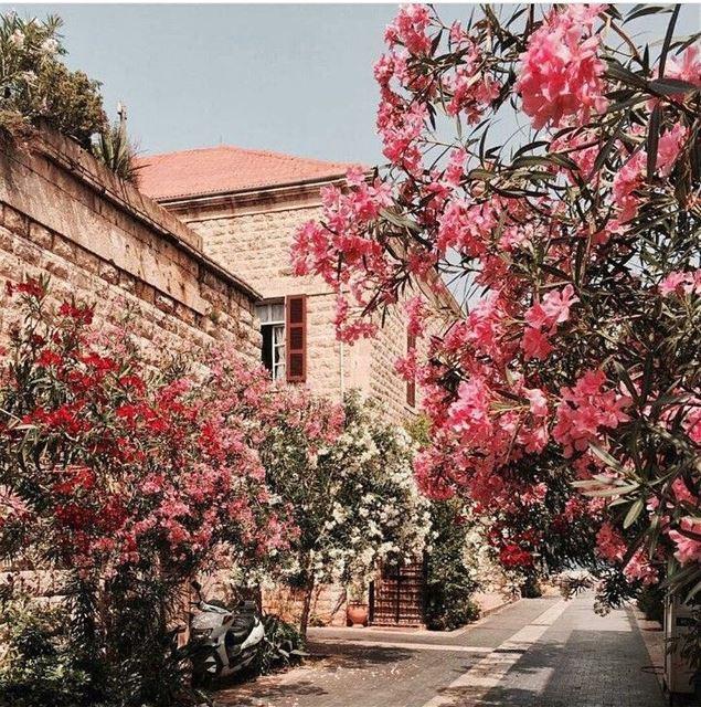 Spring lebanon flowers instagood instagramers instagrammers ... (جونية - Jounieh)