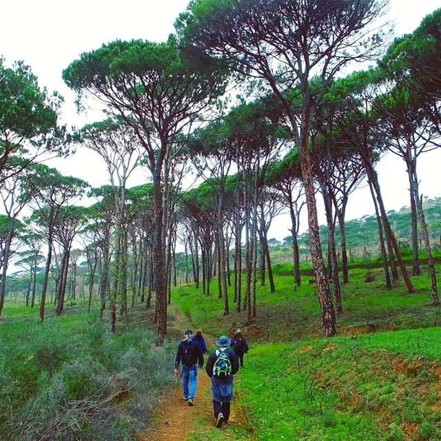 EXPLORE I LEBANON, DEIR EL HARF & HIKING THIS SUNDAY. BOOKING.03955642.🌲 (Deïr El Harf, Mont-Liban, Lebanon)