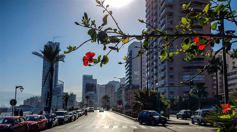 What if cars disappear..And traffic lights convert into flowers and... (Beirut, Lebanon)
