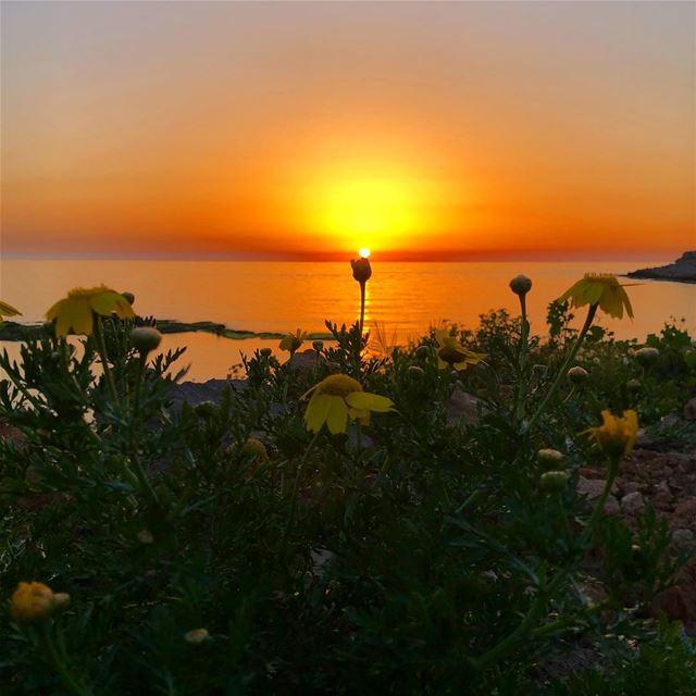لاغزلك من نور الشمس اسوارة بحطها بإيديكي sunset_vision sunset_lovee ... (Ô Fleur De Sel)