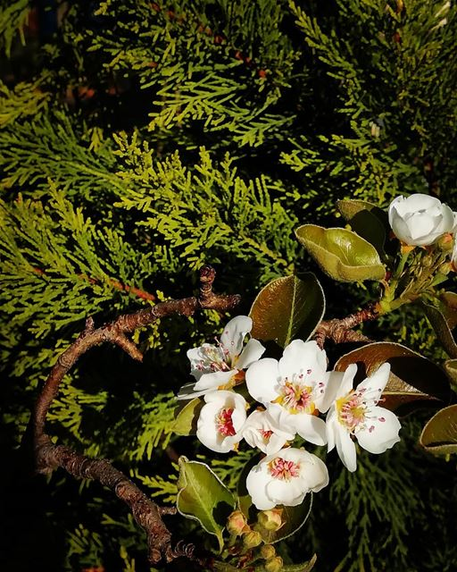 flowers_photography nature_photography nature green lebanon_pictures...