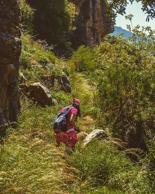 Wildreness on the mountain edge... (`Ammatour, Mont-Liban, Lebanon)