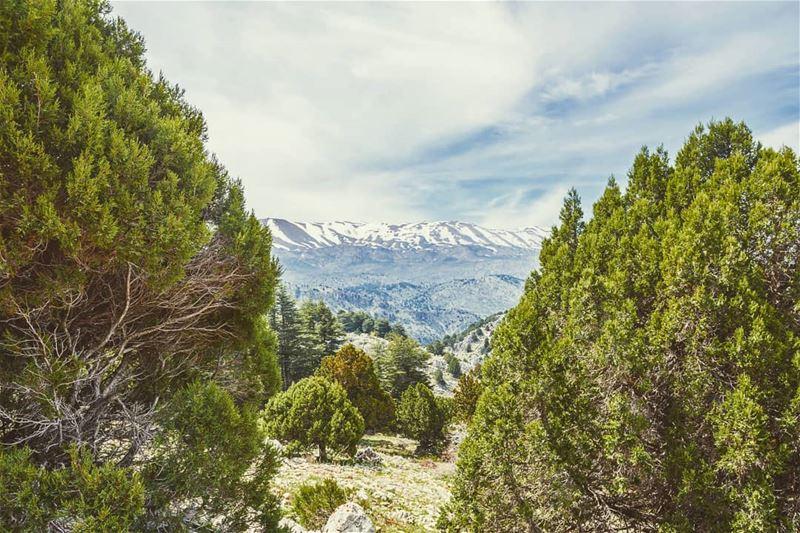 Beyond that mountain lie your dreams... (`Akkar, Liban-Nord, Lebanon)
