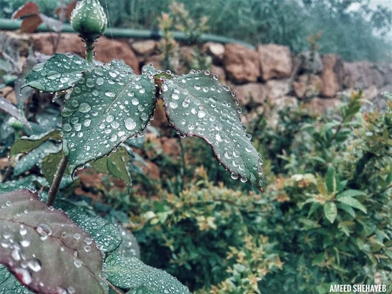 """""""Every dew-drop and rain-drop had a whole heaven within it.""""-Longfellow.... (Aley District)"""