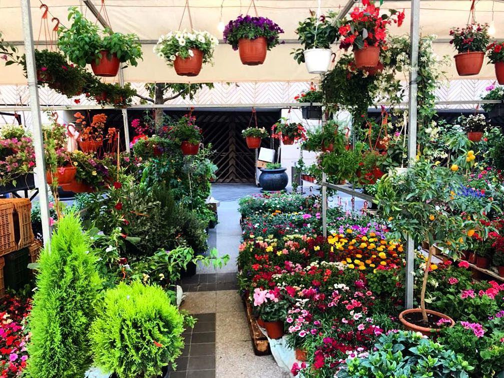 "i must have flowers always and always 🌷""Claude Monet"" beirutsouks ... (Beirut Souks)"