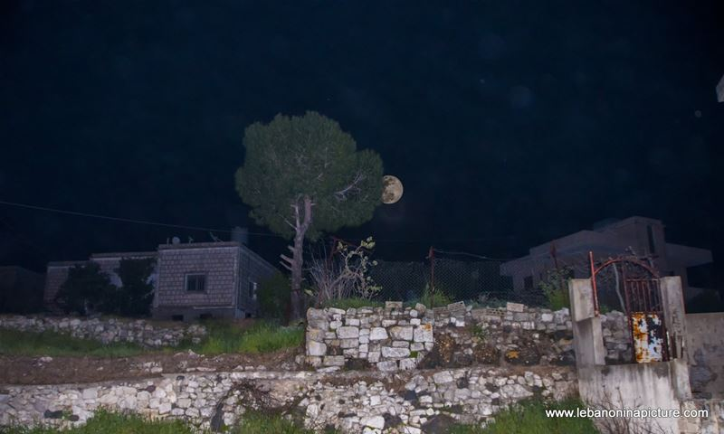 Full Moon coming from behind a tree (Yaroun, South Lebanon)